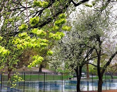 Cumberland Street/Fort Greene Park - Photo Thumbnail 9