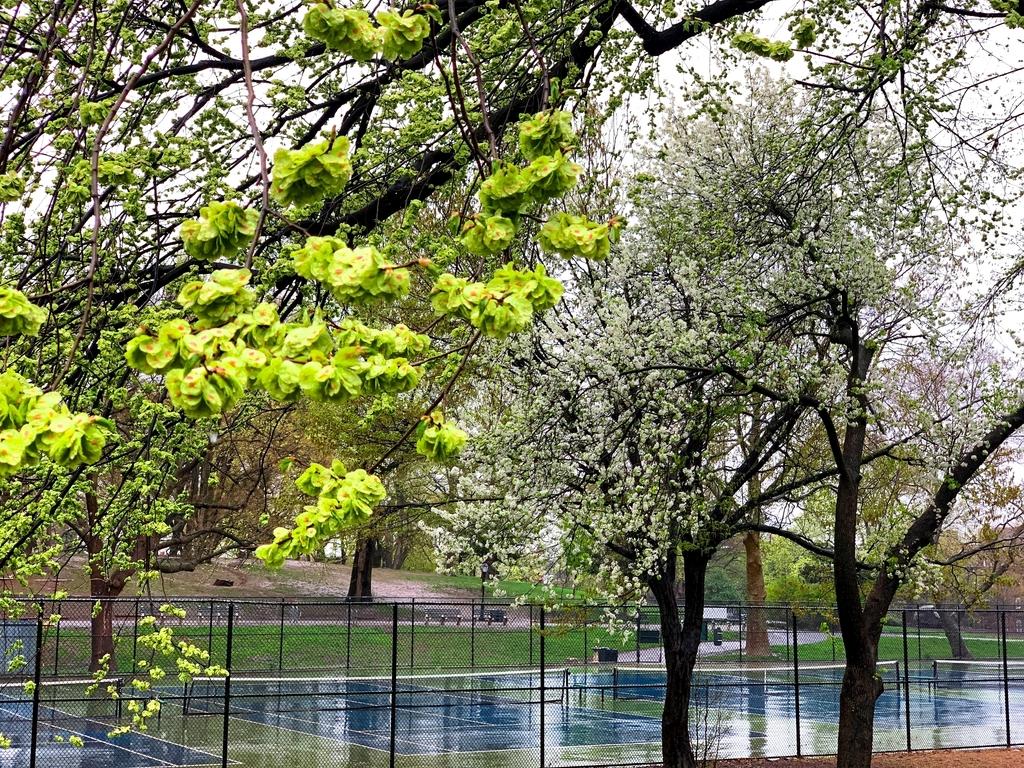 Cumberland Street/Fort Greene Park - Photo 9