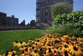 Studio, East Harlem Rental in NYC for $2,800 - Photo 1