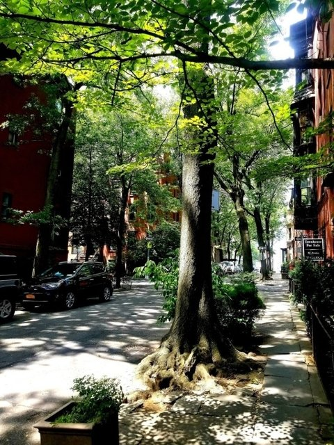 1 Bedroom, Brooklyn Heights Rental in NYC for $3,621 - Photo 1