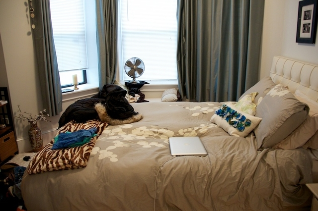 3 Bedrooms, Coolidge Corner Rental in Boston, MA for $3,195 - Photo 2