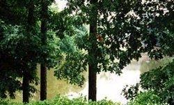 3 Bedrooms, Dunwoody Panhandle Rental in Atlanta, GA for $1,318 - Photo 2