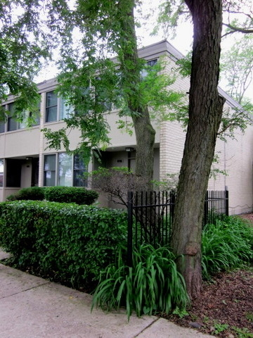3 Bedrooms, University Village - Little Italy Rental in Chicago, IL for $2,750 - Photo 1