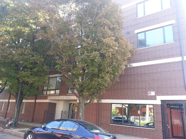 3 Bedrooms, Roscoe Village Rental in Chicago, IL for $3,000 - Photo 1