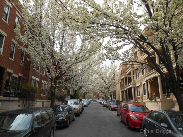 2 Bedrooms, Commonwealth Rental in Boston, MA for $2,295 - Photo 2