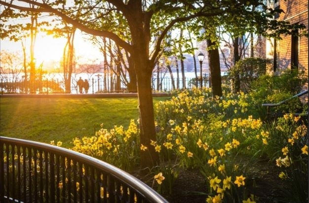 Studio, Battery Park City Rental in NYC for $2,300 - Photo 1